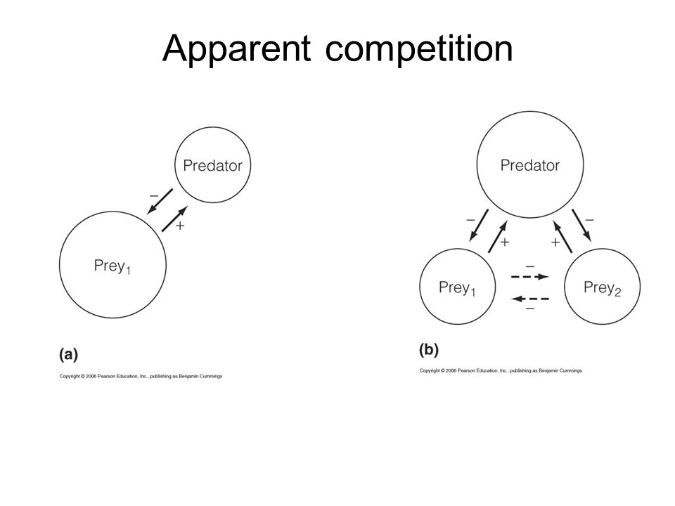 Botany Apparent Competition Pic 2
