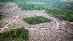 Botany Habitat Fragmentation Pic 2