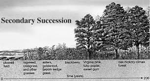 Botany Secondary Succession Pic 3