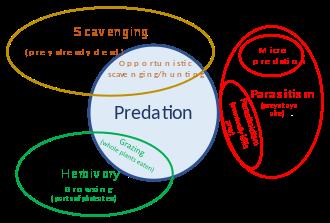 Botany Predator Prey Pic 3