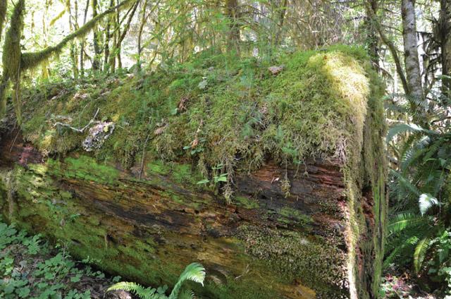 Botany Community Pic 2