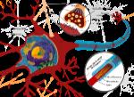 1200px-Complete_neuron_cell_diagram_es.svg